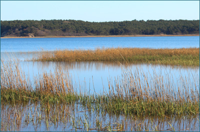 Great Island, Wellfleet, MA