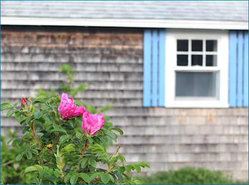 Rent a Wellfleet Cottage, Cape Cod, MA